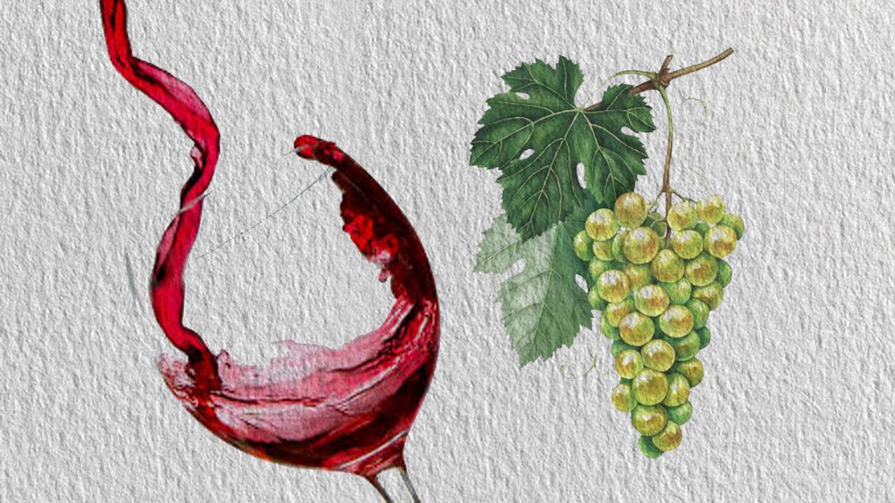 Vinos orgánicos y veganos, tendencia en la industria vitivinícola